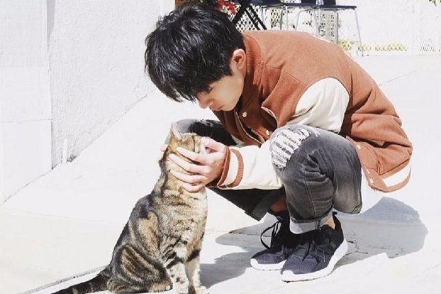 易烊千玺ins账号公开,如此爱猫且软萌的他又将圈粉无数